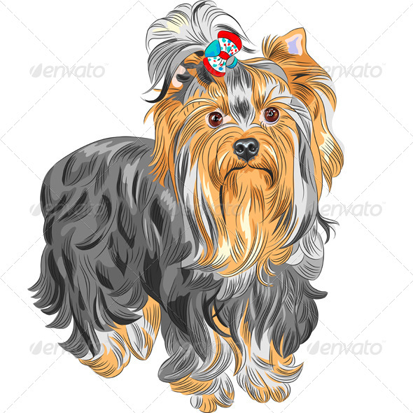 GraphicRiver Vector Pedigreed Dog Yorkshire Terrier 5431939