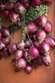 Bunch of red onions from Tropea, - PhotoDune Item for Sale