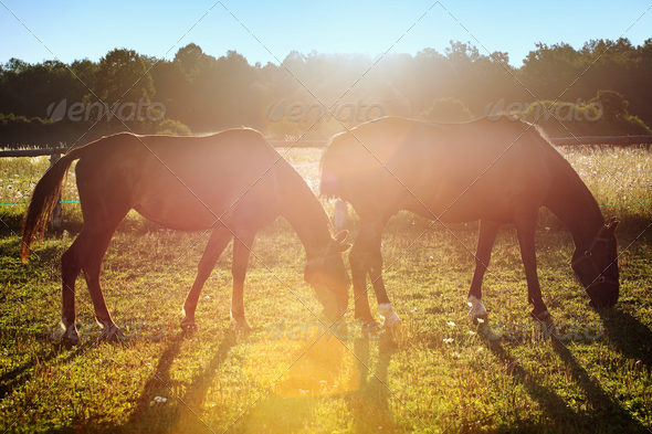 Portrait of a horse grazing - Stock Photo - Images