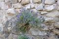 flowering plant on the rocks - PhotoDune Item for Sale