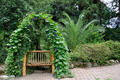 bench entwined plant - PhotoDune Item for Sale