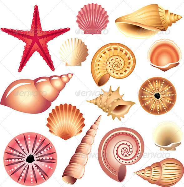 GraphicRiver Seashells Isolated on White 5460429