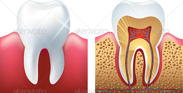 GraphicRiver Shiny Tooth and Cutaway 5460482