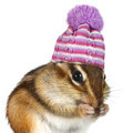Portrait of funny chipmunk with hat on white - PhotoDune Item for Sale