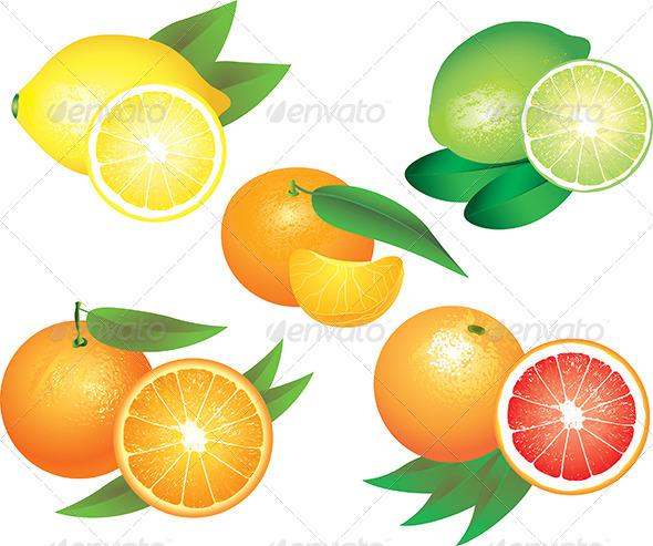 Citrus Fruits Vector Set