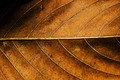 Dried Leaf Texture. - PhotoDune Item for Sale