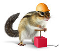 Funny chipmunk with detonator isolated on white - PhotoDune Item for Sale