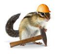 Chipmunk builder, reconstruction concept - PhotoDune Item for Sale