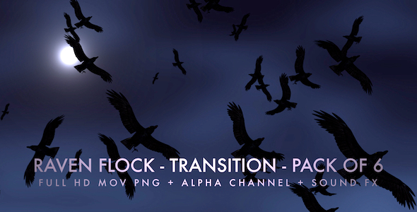 VideoHive Raven Flock Transition Pack of 6 5480778
