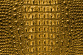 Golden Crocodile Bone Skin Texture. - PhotoDune Item for Sale