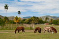 Horses and Palm Trees Field - PhotoDune Item for Sale