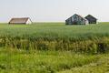Tall grain - PhotoDune Item for Sale