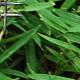 Grass Texture 01