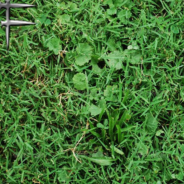 3DOcean Grass Texture 01 5485181