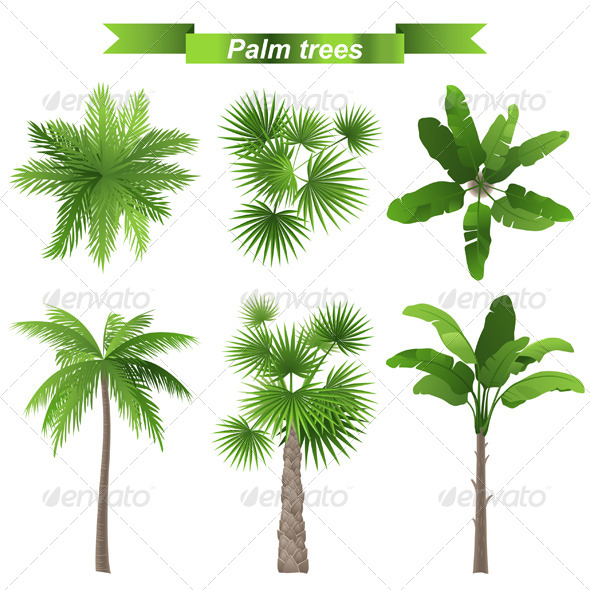 GraphicRiver Palm Trees 5487711