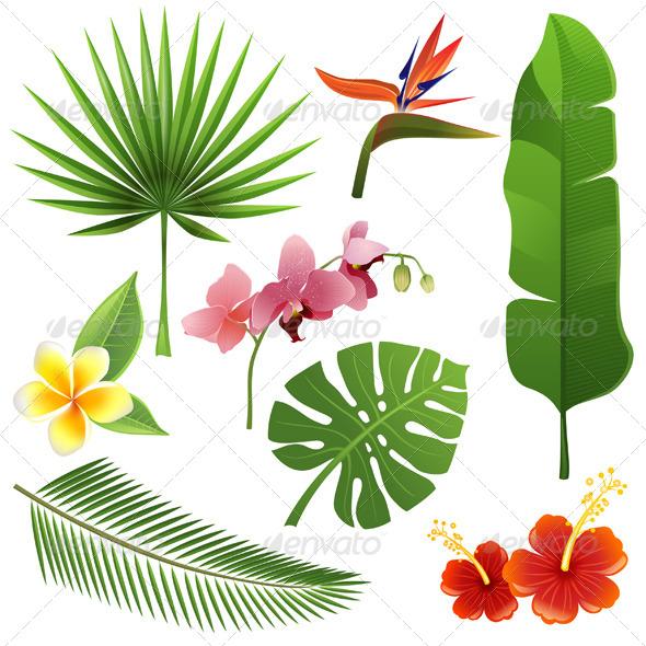 GraphicRiver Tropical Plants 5487830
