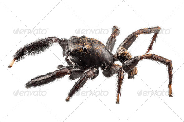 black spider - Stock Photo - Images