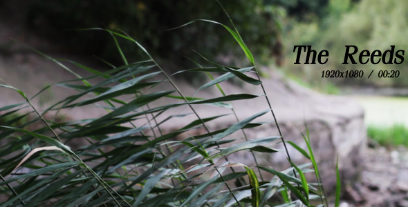 VideoHive The Reeds 2 5493090