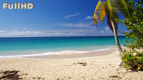 VideoHive Caribbean Beach With Palm 5495482