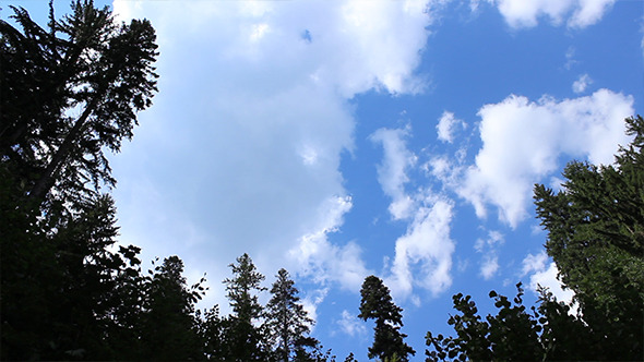 VideoHive Tall Pines and Fast Clouds 5497628