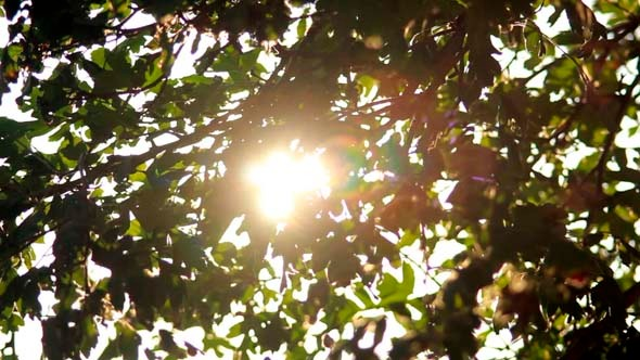 VideoHive Sun in Trees 5499027