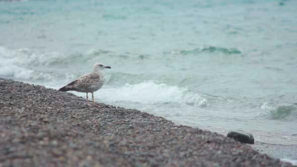 VideoHive Gulls on the Beach 7 5499683
