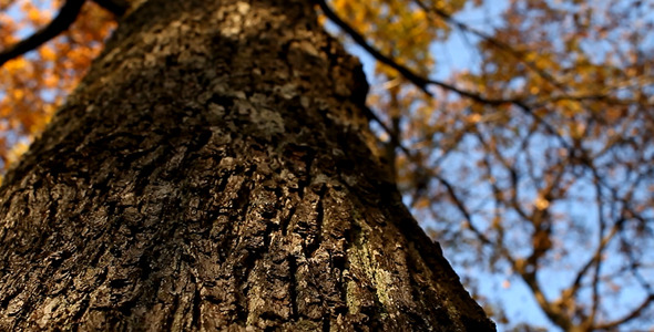 VideoHive Tree Bark 5501136