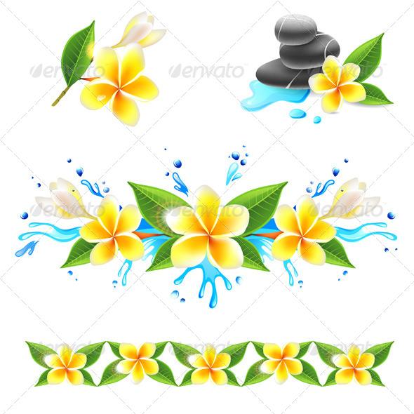 GraphicRiver Frangipani Flowers 5505103
