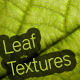 7 Leaf Textures - GraphicRiver Item for Sale