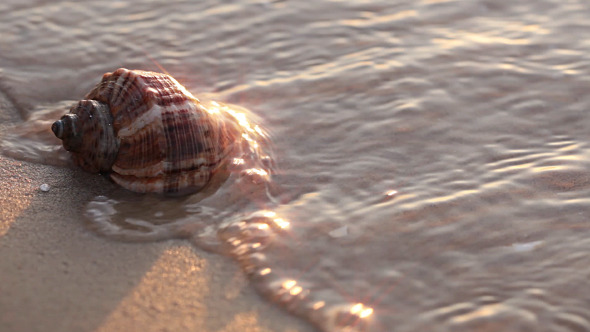 VideoHive Seashell On The Beach Close-Up 5507240