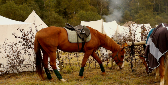 VideoHive Horse 5507428