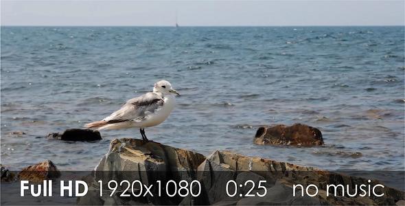VideoHive Seagull 1 5511224