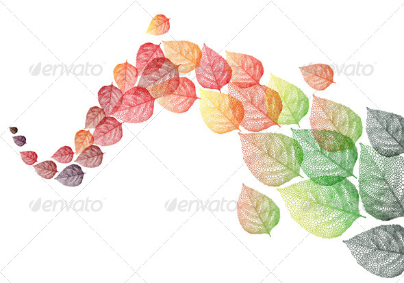 GraphicRiver Colorful Autumn Leaves 5515321