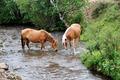 horses - PhotoDune Item for Sale