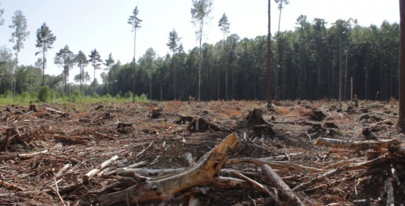 VideoHive Panorama of Devastated Forest 5523217