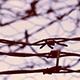No Escape Barbed Wire - VideoHive Item for Sale
