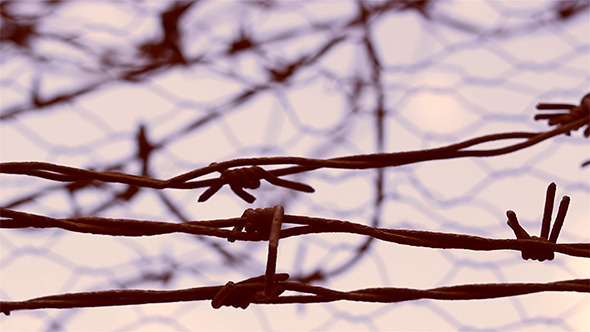 VideoHive No Escape Barbed Wire 5540288