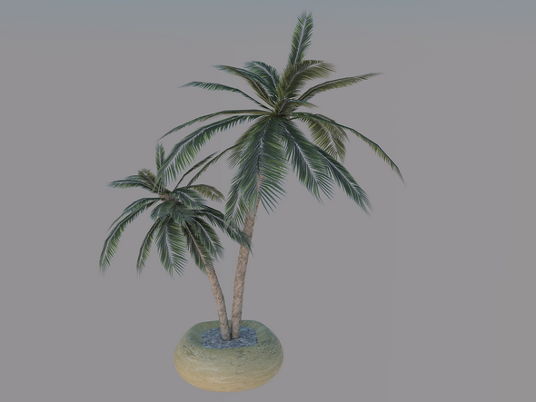 Palm Model - 3DOcean Item for Sale