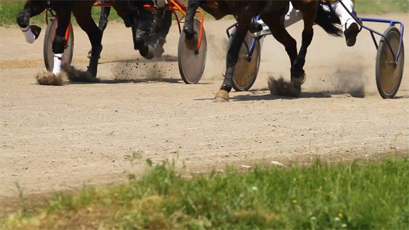 VideoHive Running Horses 5546017