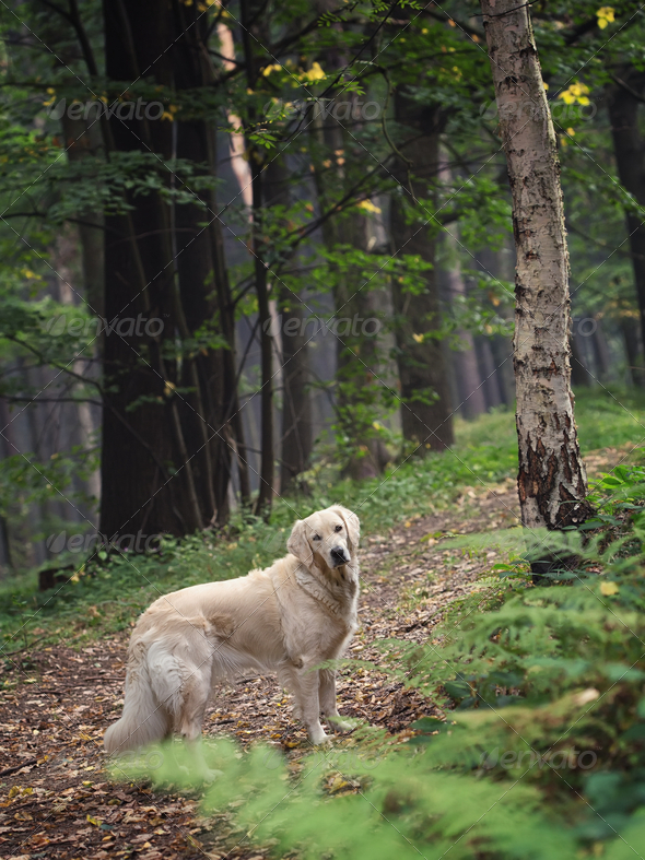 Dog in the forest - Stock Photo - Images