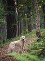 Dog in the forest - PhotoDune Item for Sale