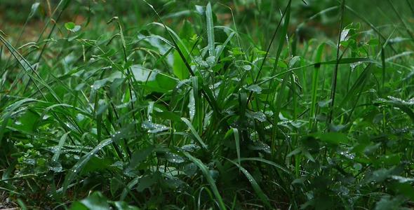 VideoHive Grass In The Rain 5549305