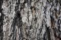Texture - Wood Bark - PhotoDune Item for Sale