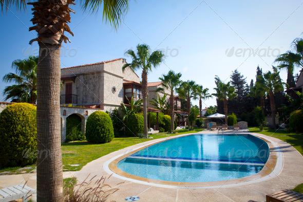 Palms near the pool-1
