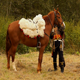Gusar Prepares A Horse - VideoHive Item for Sale