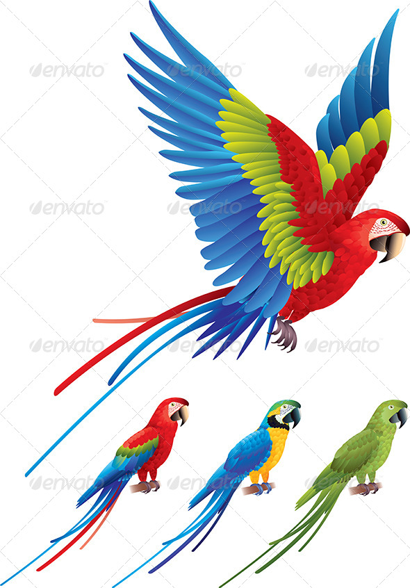 GraphicRiver Macaw Parrot Spread Wings and Tree Sitting Aras 5555509
