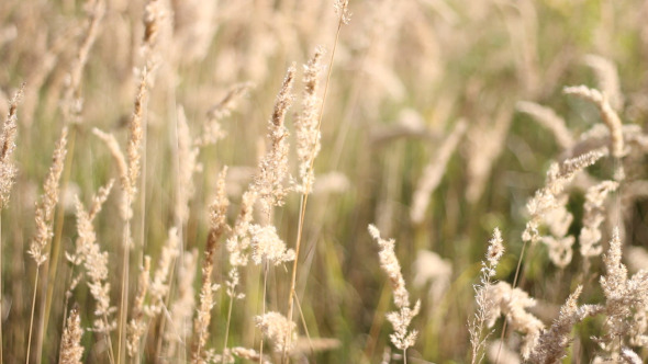 VideoHive High Grass Field 5556998