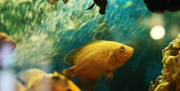 VideoHive The Fish 2 5561292