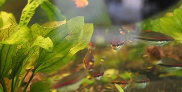VideoHive Fishtank 5561879