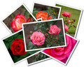 Collage of the flower photos isolated on the white background - PhotoDune Item for Sale